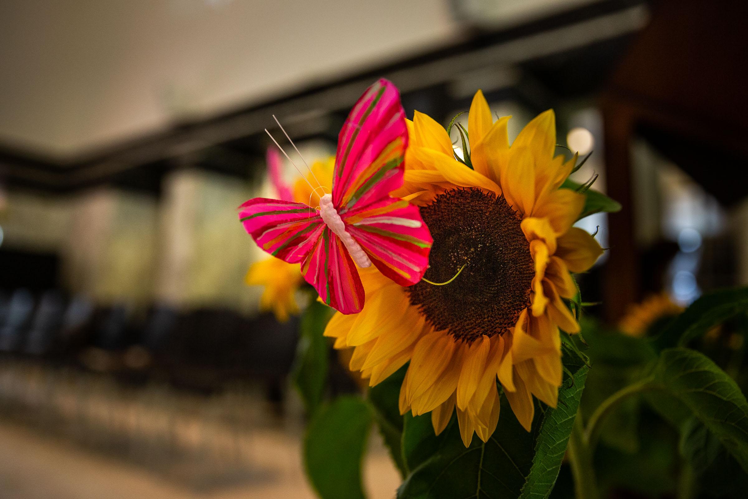 Detail van een roze vlinder op een zonnebloem tijdens een afscheid van een stil geboren kindje